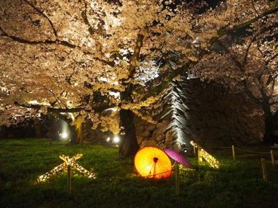 「舞鶴公園の桜ライトアップ感想!福岡県の桜の名所はここ!2018年版」 トップ画像