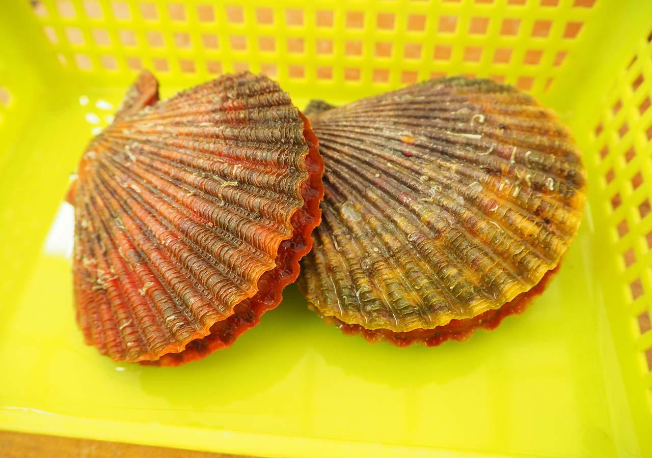 糸島観光 かきハウスもっくんのヒオウギ貝