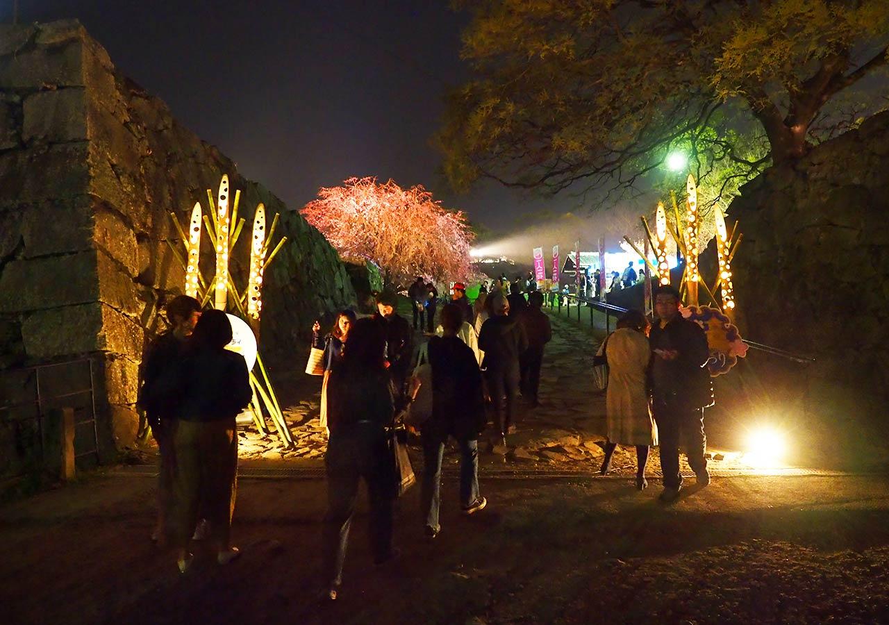 舞鶴公園「福岡城さくらまつり」ライトアップ 福岡城の桜園(天守台)ライトアップ
