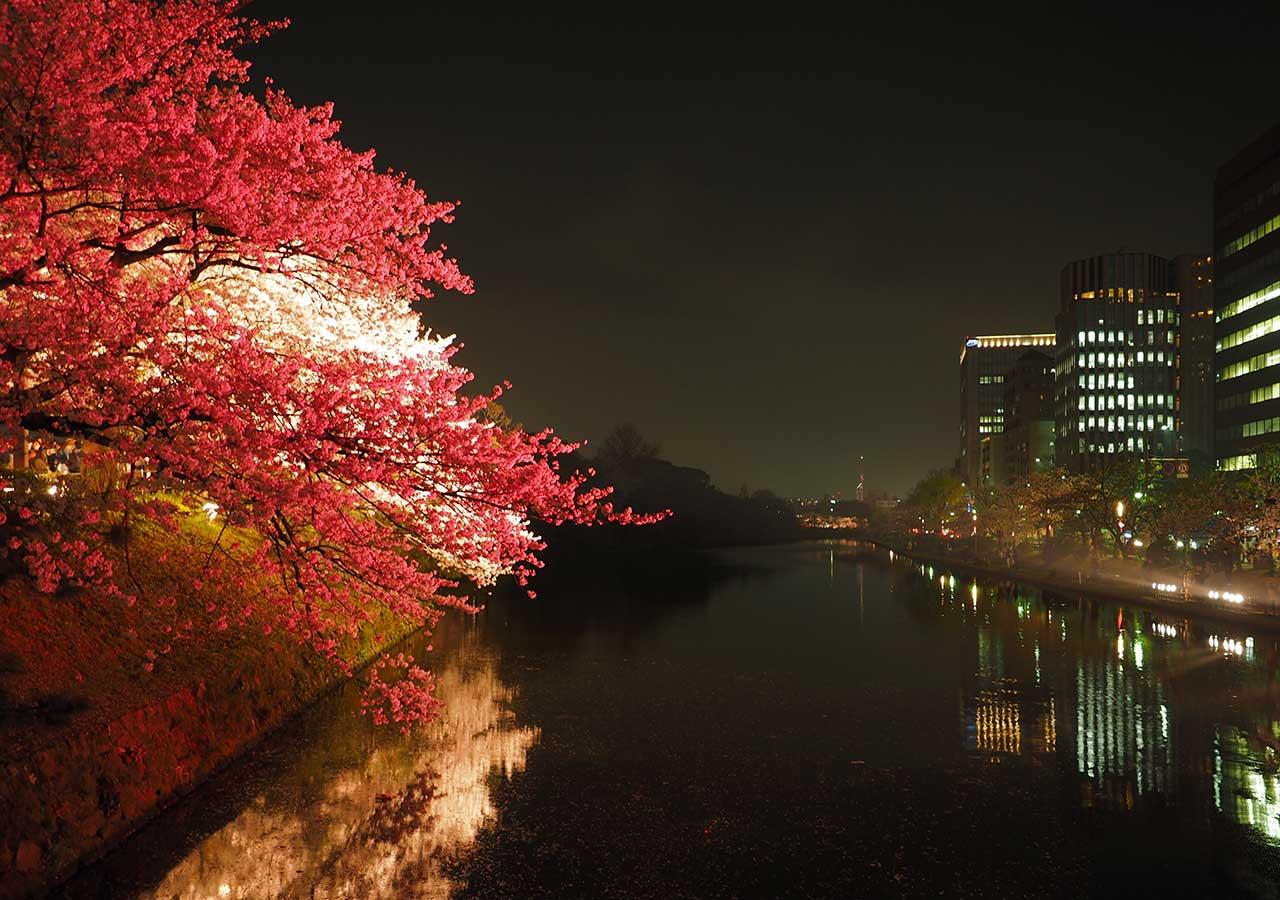 舞鶴公園「福岡城さくらまつり」ライトアップ 上之橋御門跡地