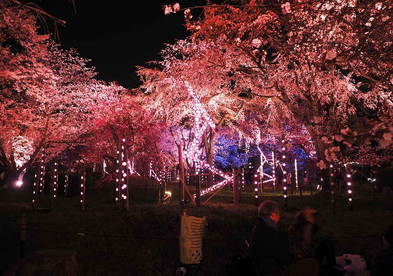 舞鶴公園「福岡城さくらまつり」ライトアップ 福岡城の御鷹屋敷跡ライトアップ