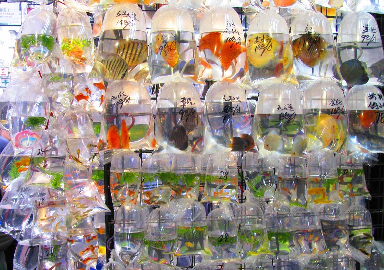 香港観光 金魚街