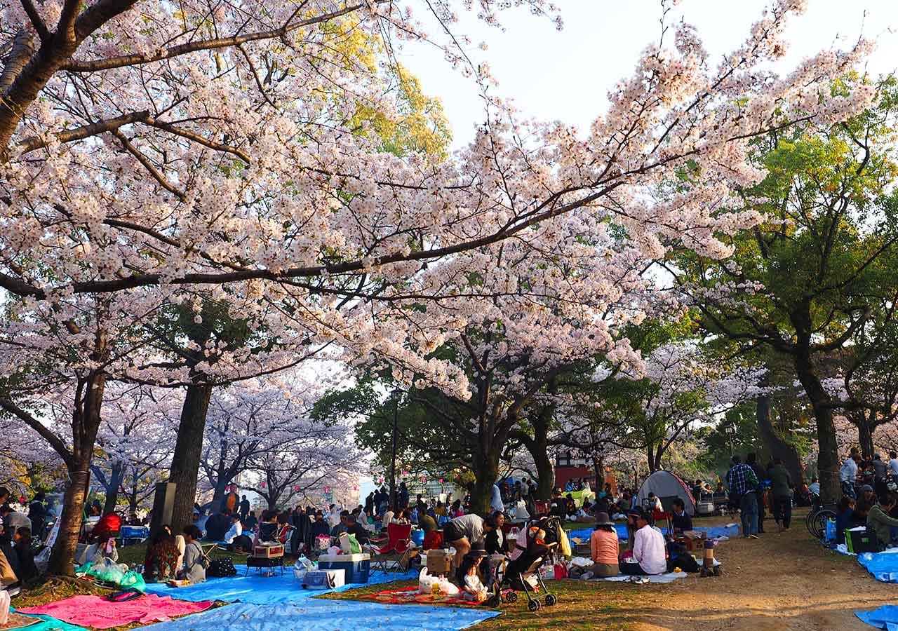 福岡県北九州 小倉城庭園のお花見