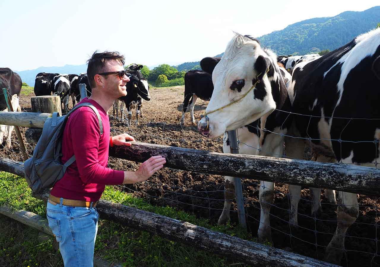 福岡観光 もーもーらんど油山牧場 牛と二コラ