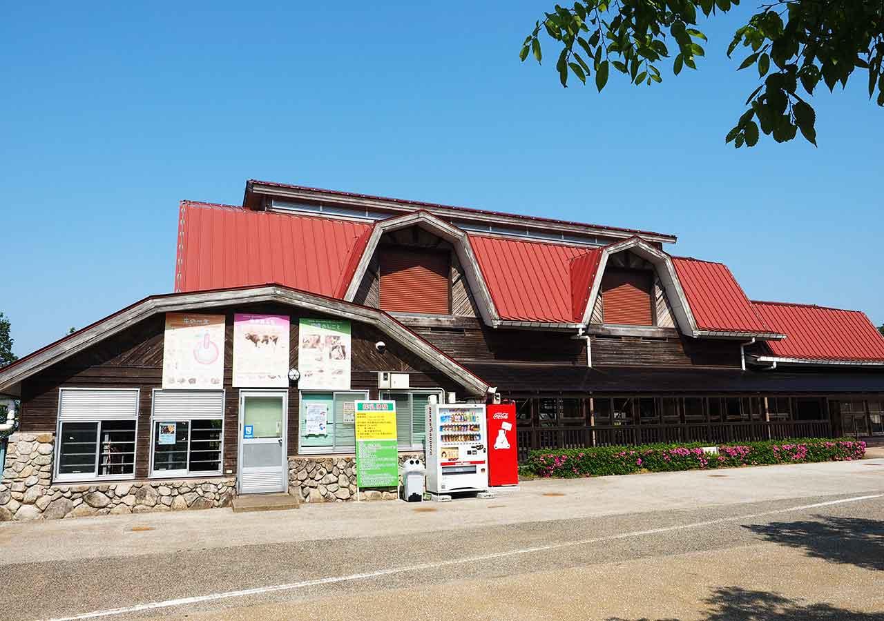 福岡観光 もーもーらんど油山牧場 搾乳牛舎