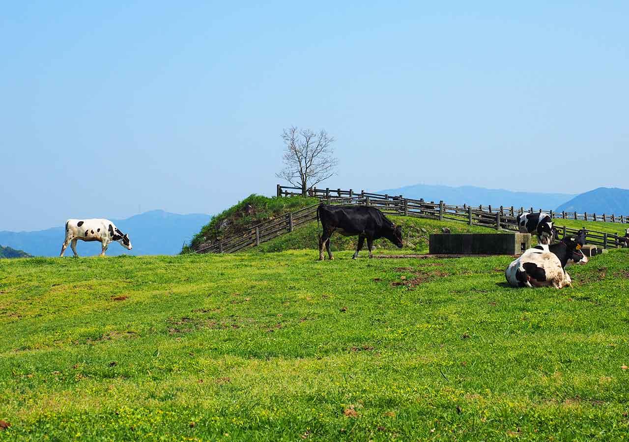 福岡観光 もーもーらんど油山牧場 放牧地