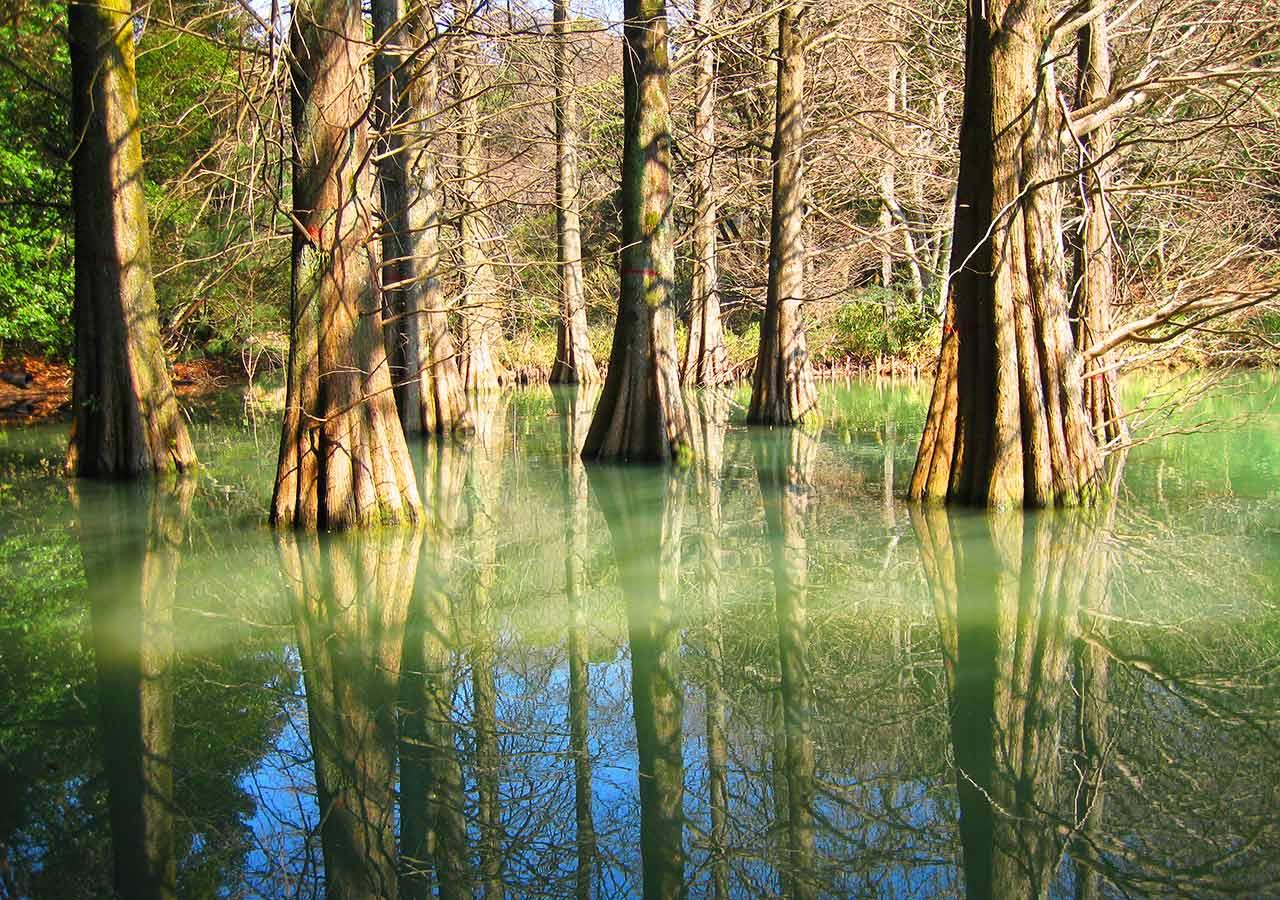 ゴールデンウィーク 福岡の穴場 子供が喜ぶ自然豊かな場所 九大の森
