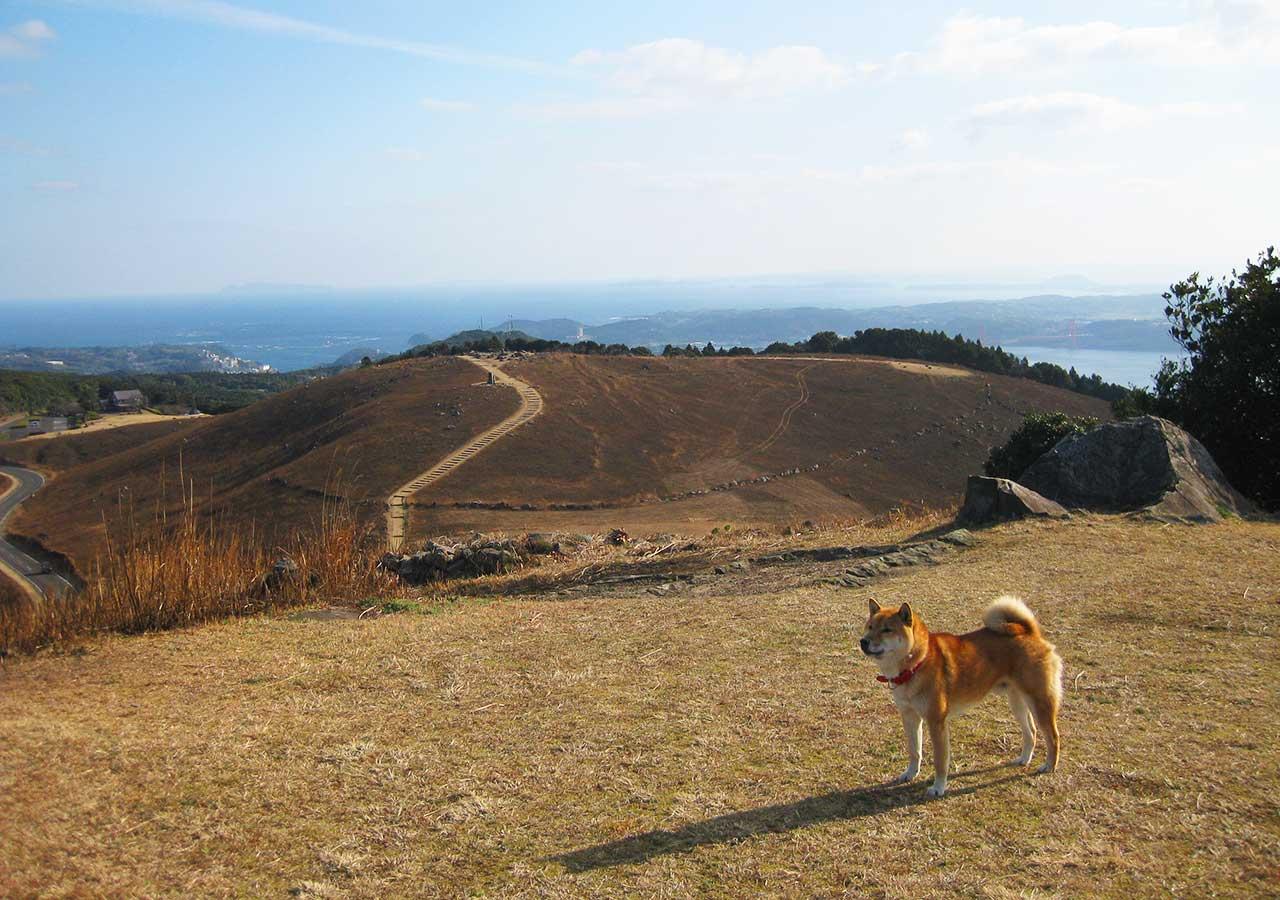 長崎 平戸 川内峠と犬