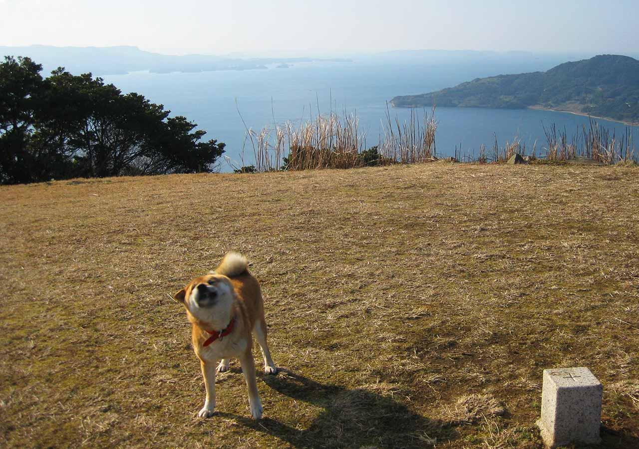 長崎 平戸 川内峠の丘の上で会った犬