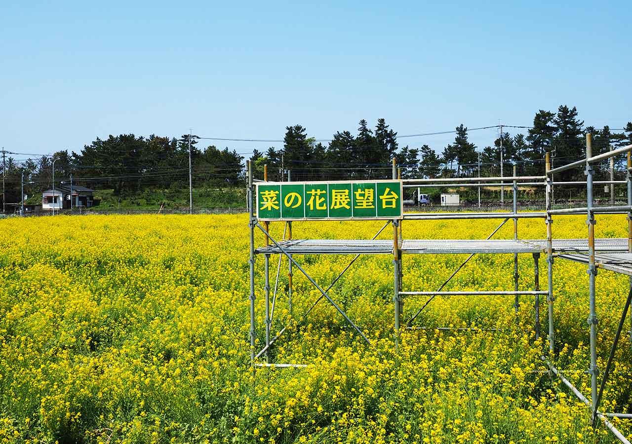 産直市場「福ふくの里」 菜の花畑