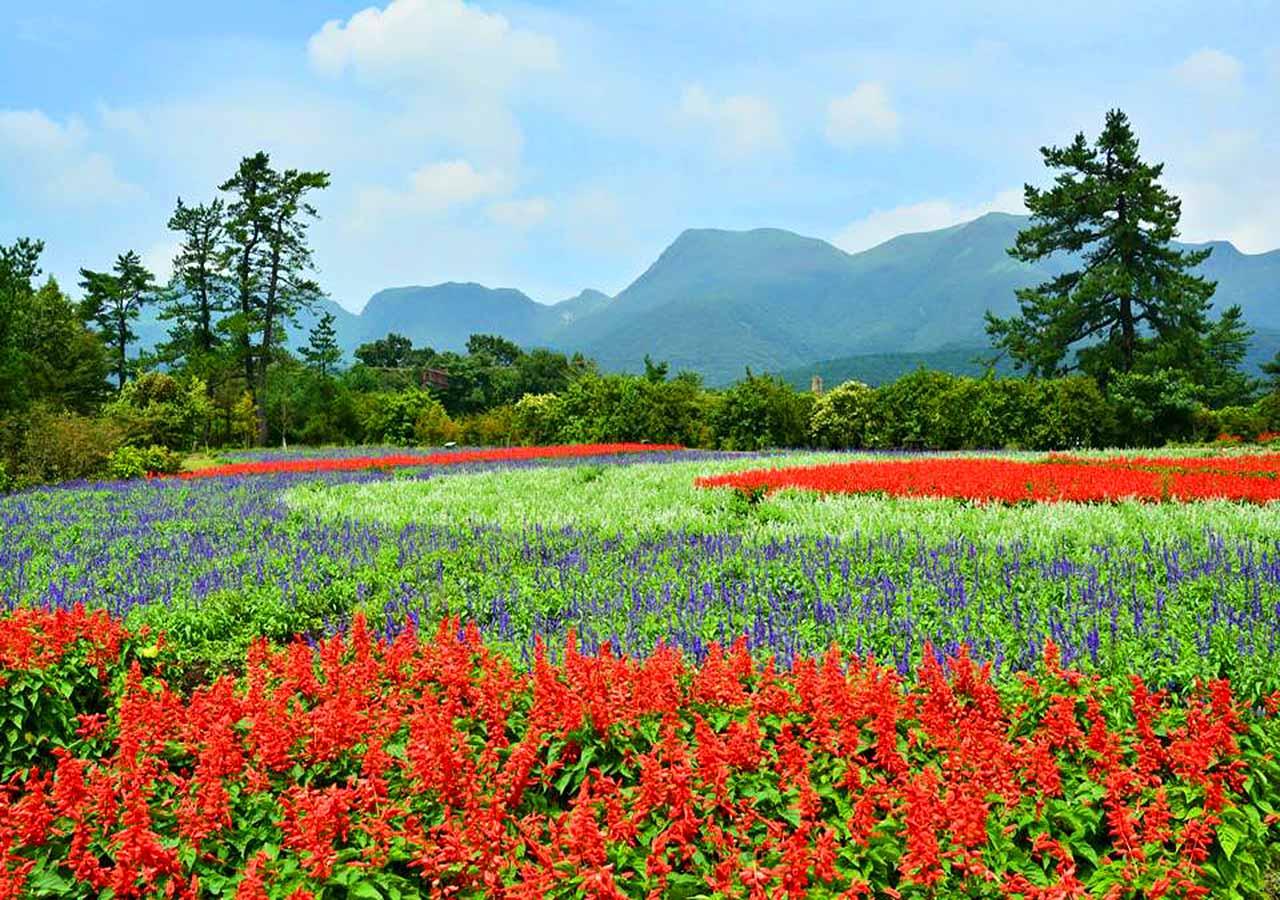 熊本県 黒川温泉周辺のおすすめスポット くじゅう花公園