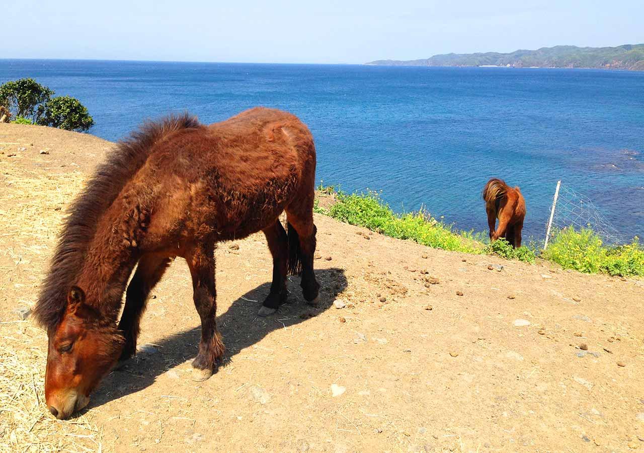 長崎県 対馬 対州馬
