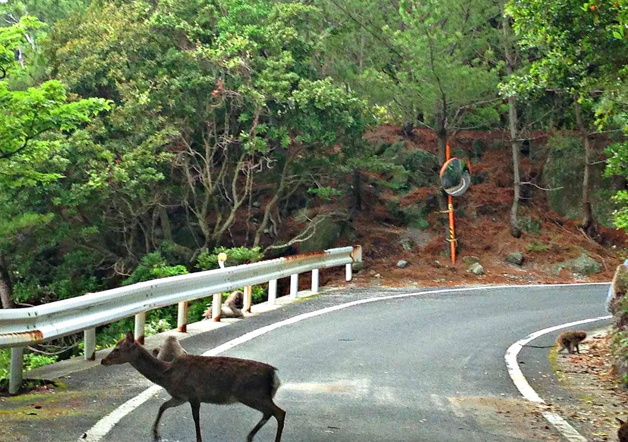 鹿児島 屋久島一周の観光コース 西部林道