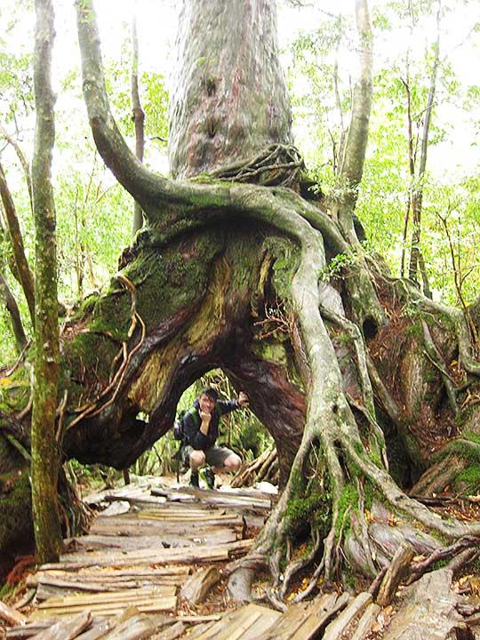 鹿児島 屋久島一周の観光コース くぐり杉