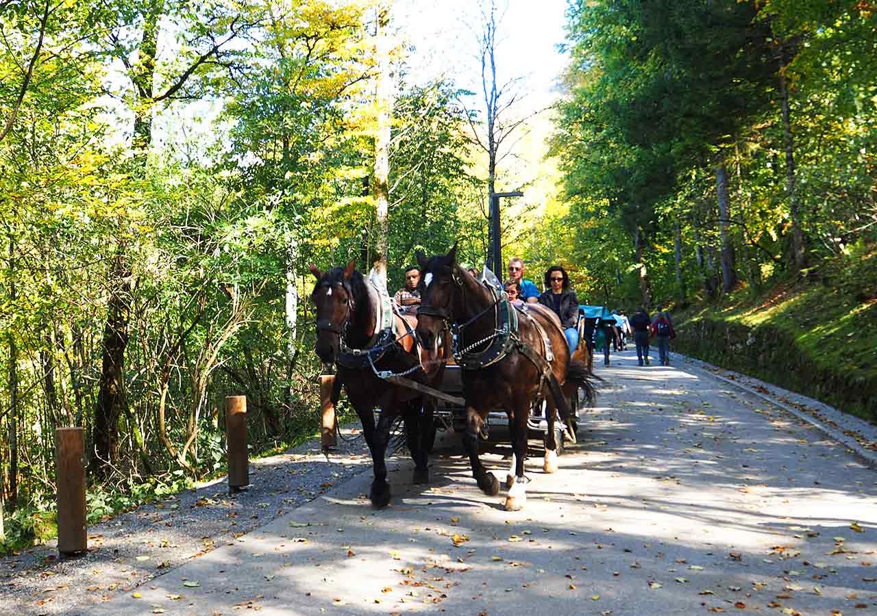 ドイツ観光 ノイシュバンシュタイン城の行き方 馬車