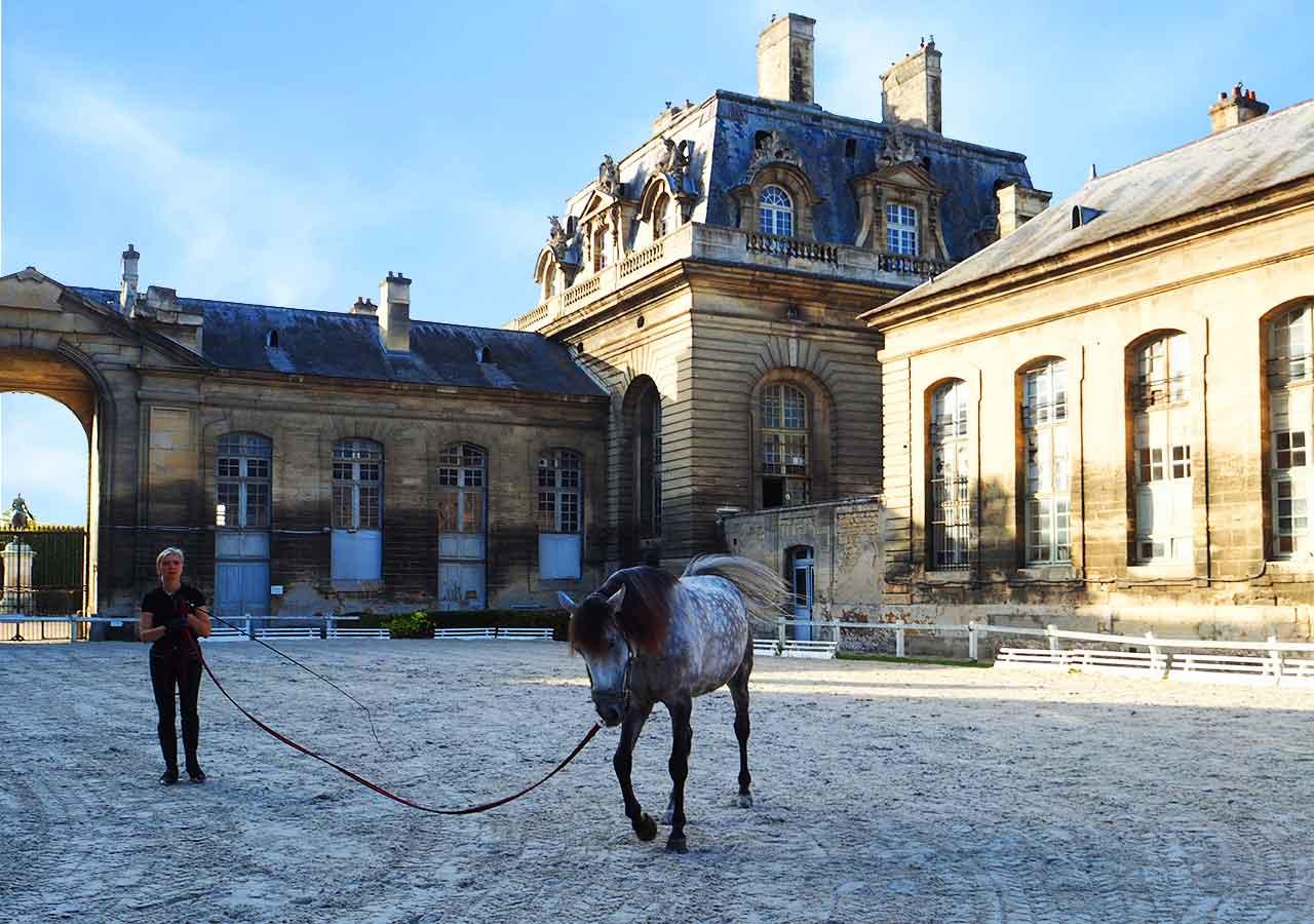 パリ観光 穴場スポット シャンティイ城の大厩舎の馬