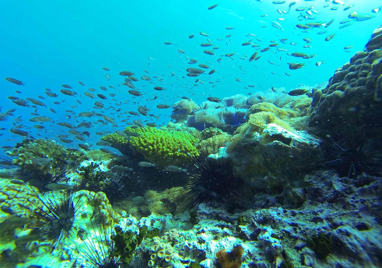 「8月の海外旅行!コスパ最強の治安・気候がいいおすすめの国は?」 パンガン島のダイビング