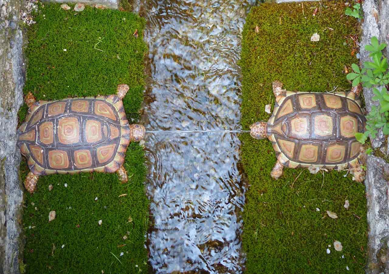 ザルツブルク観光 ヘルブルン宮殿 トリックファウンテン(Trick fountain)の亀の噴水
