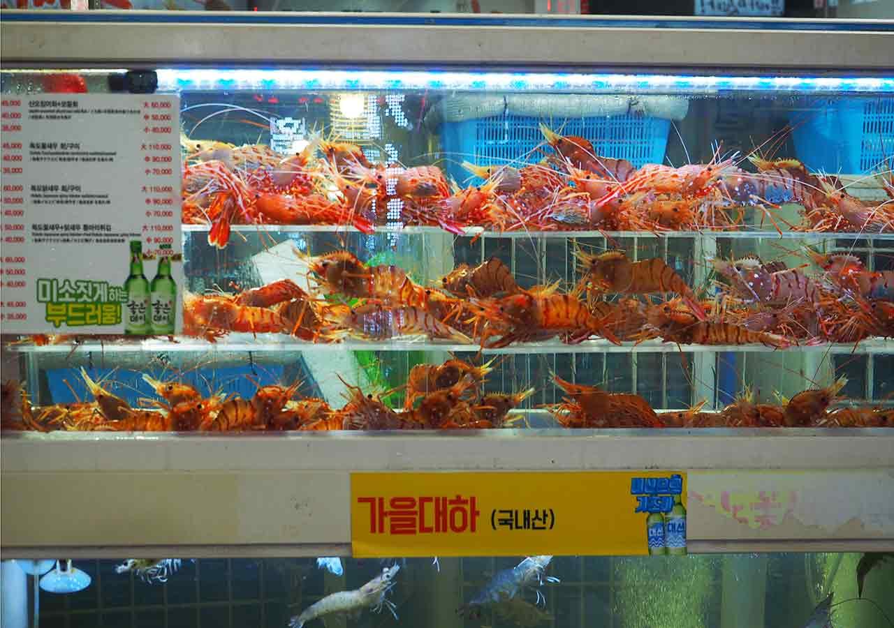 釜山観光 BIFF広場の屋台  海鮮レストランストリートの水槽