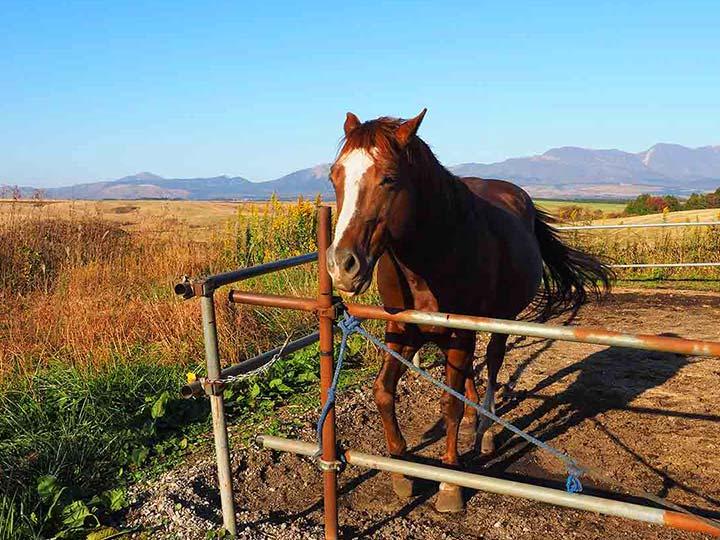 「阿蘇山の絶景が望める「エルパティオ」宿泊記!牧場で乗馬体験を楽しもう!」 トップ画像