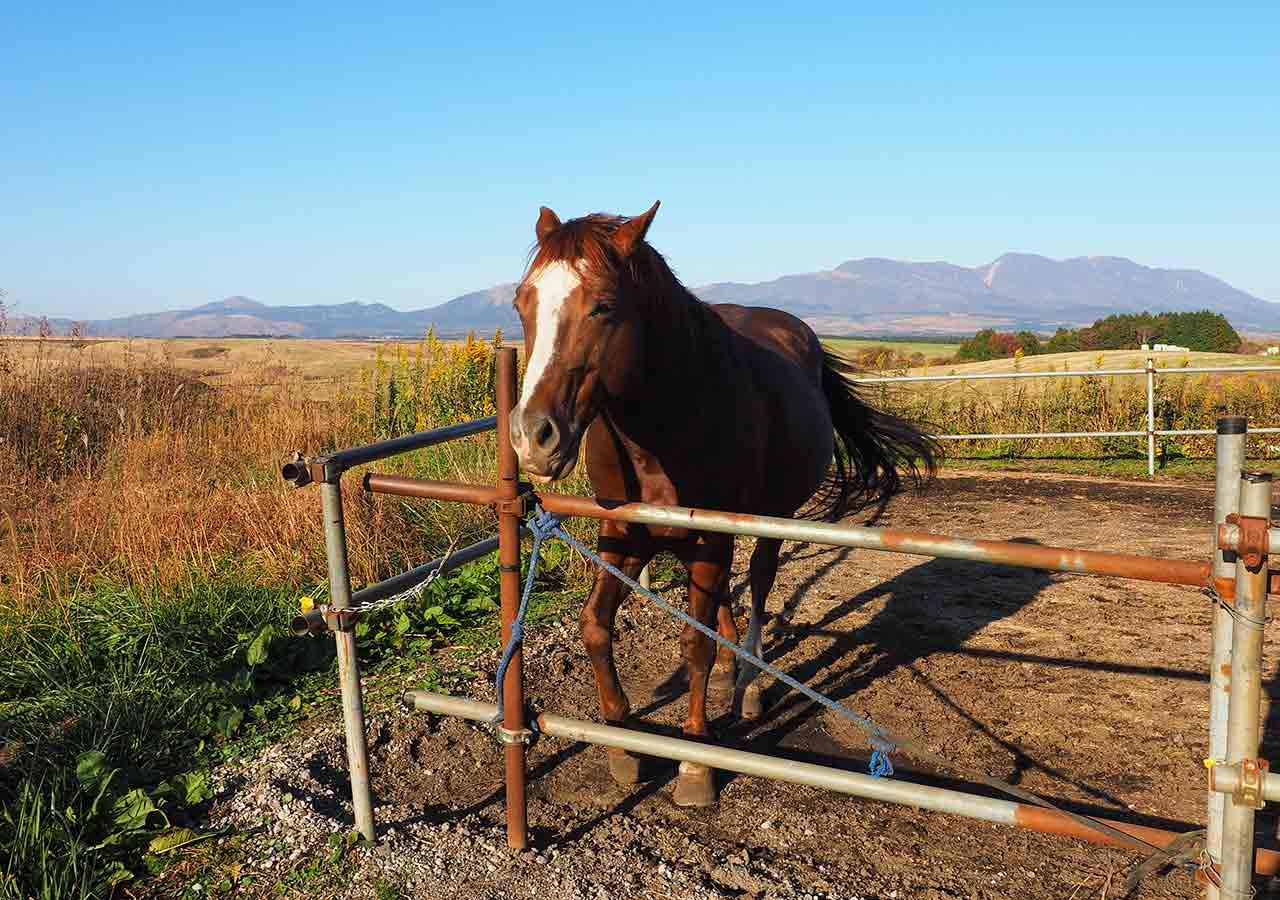 熊本県阿蘇 エル・パティオ牧場 馬