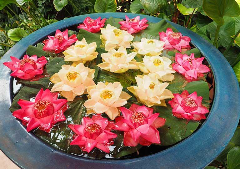バンコク観光 ジムトンプソンの家(Jim Thompson House) 庭園の花
