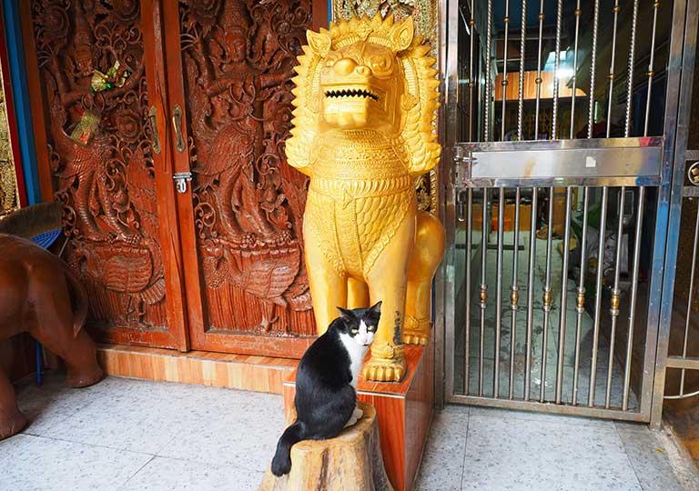 バンコク観光 ワットクンチャン(Wat Khun Chan) 像と猫