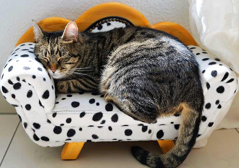 昼寝の画像