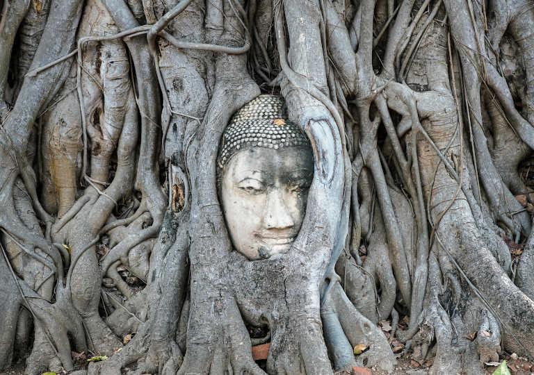 タイのアユタヤ遺跡群 ワットマハタートの木にのみこまれる仏像