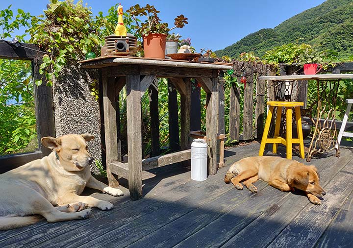 九份 サニールーム(陽光味宿) テラスと犬