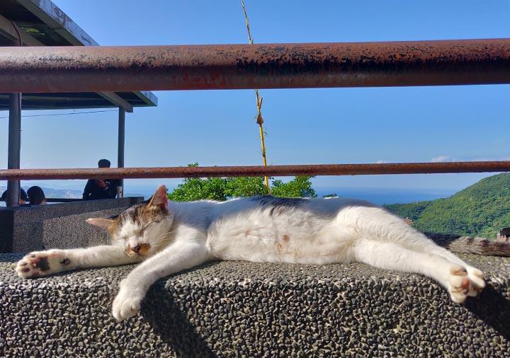 九份 展望台(基山街觀景臺)にいた猫の画像