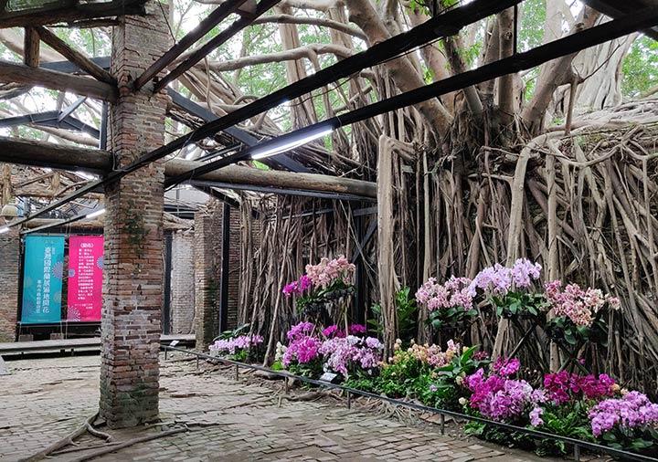 台南 安平樹屋の内部