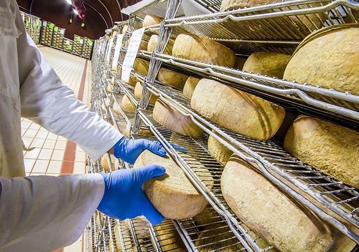 イタリアのチーズ製造業者